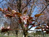 2018-04-03-13246 (vale 83) Tags: blossom nokia n8 friends coloursplosion colourartaward