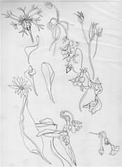 Shapes in the Fields (SandraNestle) Tags: sandranestle sketchbookart shapes flowers fleurs field eachdaycounts drawings contourdrawing