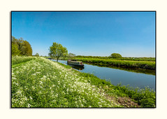 Boating on the River Cam (fenman_1950) Tags: rivercam fenland waterbeach fens boat water sky river barge tree