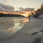 Fallen Tree In St Lawrence River thumbnail