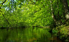 Calm river (phl_with_a_camera1) Tags: nature spring sun landscape wideangle wide water lake stream