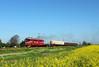 Moderate Clag (Krali Mirko) Tags: bdz tp cargo freight train diesel locomotive electroputere 060da 06097 krumovo bulgaria railway field бдж влак локомотив крумово българия железница