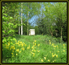 Golden Spring (M E For Bees (Was Margaret Edge The Bee Girl)) Tags: apiary apiculture national hive trees sun spring blue sky garden green grass growing outdoors countyside honeybees colony canon yellow flowers primulaveris cowslips