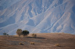 Bare (nedlugr) Tags: california ca usa upperojai ojaicalifornia ojai mountains wildfire damage trees bare burnedbare wildes venturacounty ashes