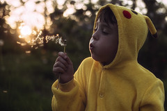 Alfie (markfly1) Tags: kids children boychild yellow pokemon pikachu outfit costume blowing dandelion seeds clock last light sunset sun falling beneath horizon apple blossom nikon d750 50mm prime wide open shallow focus dreamy bokeh