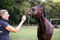 (earthly magic 11) Tags: horse smile funny cheeky love laugh humor shine chestnut mane teeth