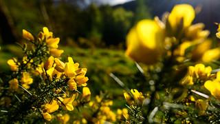 spring colours on Birnam Hill