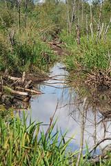 Волинське болото InterNetri Ukraine 19