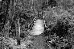 Over the Bridge & Through the Woods (Paul McCarthy99) Tags: sony a6000 minolta manual anseladams zonephotography 24mm