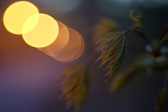Érable 3 (Patrice StG) Tags: sony a7ii gimp cosinon55mmf21 macro twilight dusk brunante crépuscule lampadaire bokeh québec spring printemps nuit night