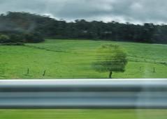 Tree 🌳 (marlenevanesaromero) Tags: sonya7ii sony snapseed carretera movimiento green spring primavera verde landscape asturias paisaje tree árbol