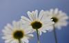 Flowers (Xtraphoto) Tags: himmel sky blumen flowers flower down unten
