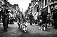 Marching on. (Mister G.C.) Tags: street urban photography blackandwhite bw olympus olympustrip35 dzuiko zuiko f28 primelens fullframe retro retrocamera zonefocus zonefocusing streetphotography urbanphotography shot image photograph candid people lomographycolour400 man male guy dogs huskies husky pet lowpov lowpointofview scottishindependencemarch monochrome town city analog analogphotography analogue 35mm film filmcamera schwarzweiss strassenfotografie mistergc glasgow scotland europe