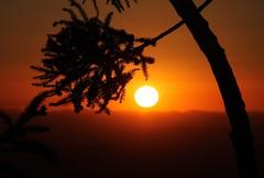 Obra prima do Pai... (Vinicius Montgomery - Itajubá-MG - Brazil) Tags: prof vinícius montgomery itajubá serra da mantiqueira sul de minas gerais brazil araucária sunset