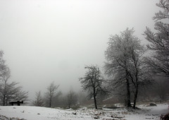 IMG_8823 (dmes55) Tags: vosges donon neige