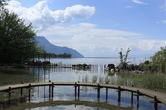 jardin instinctif (bulbocode909) Tags: vaud suisse noville jardininstinctif lacléman lacs nature printemps paysages montagnes nuages arbres rochers pontons reflets bleu vert grangettes eau groupenuagesetciel