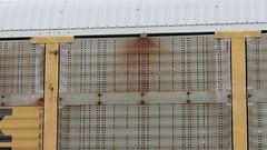 IMG_3104 (jumpsoner) Tags: freights freightculture freightgraffiti foamer foamwr freghtculture railroadphotography railroad railfan benching benchingsteel benchingtrains bencher boxcars benchingfreights bgsk photography graffiti graffculture graff