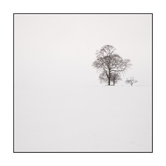 32/100x (neals pics) Tags: 100xthe2018edition 100x2018 image32100 tree snow snowing winter mono isolated minimal minimalist art countryside rural suffolk uk beastfromtheeast canon
