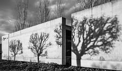 Sombras y luces (Alejandro González i Mas) Tags: beatiful arquitectura bw airelibre alicante tribute sombras luz distorsión atardecer árbol sony rx100 kertsézs light