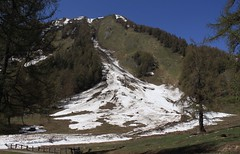 séquelle hivernale (bulbocode909) Tags: valais suisse ovronnaz odonne alpages arbres forêts printemps montagnes nature avalanches neige vert bleu paysages