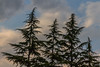 Colourful sky (Marta Panzeri) Tags: trees firs contrast clouds sky countryside colours cloundy daylight fir tree nature natural