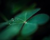 ECS_3441-01 (Deepak Kaw) Tags: lowkey macro macromondays colour composition nikon nature drop droplet heart green artistic