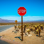 Stop in Joshua Tree National Park thumbnail