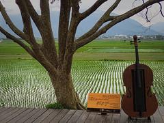 instrument des champs (2) (8pl) Tags: instrument instrumentdemusique champs arbre rizières tronc paysage campagne panneau pancarte chishang taïwan cordes instrumentàcordes brun vert