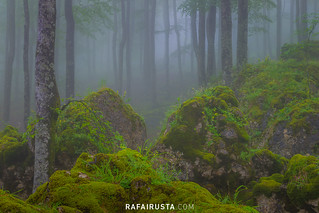 La magia del bosque en primavera
