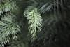 . (re <be>) Tags: adiantumcapillusveneris aspleniumbulbiferum auckland autumn fangchinglee foliage frond garden green growth multipleexposure nature newzealand