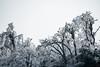 The Road to Tianmen Mountain (virtualwayfarer) Tags: zhangjiajieshi hunansheng china cn tianmenmountain tianmen mountain 天門山 tianmenmountainnationalpark zhangjiajie hunanprovince snow snowcovered icy ice freshsnow frozen winter cold coldnature nature travelphotography landscape landscapephotography rawnature dramaticnature mountains forest tree trees frostcovered visit tourism travel traveldestination alexberger sony a7rii sonyalpha adventure adventurephotography wonderofhteworld chinese visitchina visithunan
