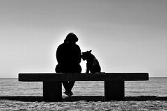 Inseparables (Osruha) Tags: amistad friendship amistat perro gos dog playa platja beach bellamar premiademar barcelona bcn barna españa espanya spain paseo passeig walks blancoynegro blancinegre blackandwhite bn bw bnw nikon nikonistas d750