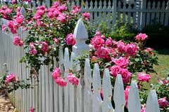 pink roses (Krasivaya Liza) Tags: inmanpark inman park atl atlanta ga georgia city festival neighborhood cityscape tour tourofhomes fence friday fencefriday fridays
