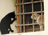 Gatto vero, gatto falso (anto_gal) Tags: friuli friuliveneziagiulia 2018 udine cividale gatto animale murales