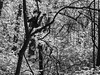 contrasts of spring (RubyT (I come here for cameraderie!)) Tags: черноеибелое olympusomde10ii m75300 bw nb bn mono monocromo monochrome blackandwhite schwarzweiss noirblanc blancoynegro trees woods forest landscape