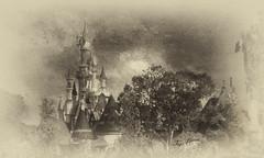 The Enchanted Castle (jeanfenechpictures) Tags: castle enchanted disney arbre tree blackandwhite noiretblanc monochrome park parc disneylandparis belleauboisdormant princess princesse