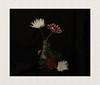 Bottled... (hall1705) Tags: bottled stilllife flower flowers lowkey stem nature foliage subtle pink nikon