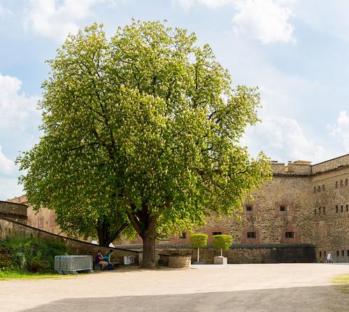 Koblenz. Fortress