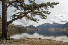 Mature Scots Pine on the edge of Crummock Water (Pexpix) Tags: scotspine landscape pine serene lakedistrict nationalpark cumbria 攝影發燒友 lake fir crummockwater trees lanthwaite nationaltrust lph sky scenic reflection water clouds mountain buttermere england unitedkingdom gb