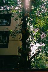 Jackfruit (zac ford) Tags: jackfruit vagator goa india nikonn55 film 35mm 2980mm