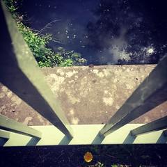 bridge flower insta (bloomspix) Tags: walknow somerset avalon artist walk