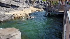20180523_101941 (TheSlayerNL) Tags: wildlands emmen zoo dieren animals adventure wildlandsadventurezoo