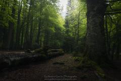 La Anciana (Guillermo García Delgado) Tags: forest ordesa valle pirineos aragon pirineo green mountain huesca worldphotoxperience fog