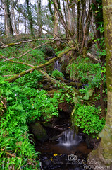 Long exposure of small waterfall in the woods (artiedivin) Tags: long exposure small waterfall woods killaloo derry ireland