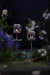 Spring Evening (haberlea) Tags: garden mygarden evening light candles flowers blossom metal decorations