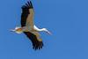Eleganz (eribe-foto) Tags: storch affenberg ciconiidae wildlife bodensee