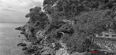(234/18) Naturalexa rebelde (Pablo Arias) Tags: pabloarias photoshop photomatix capturenxd españa cielo nubes bn blancoynegro monocromático árbol mar agua mediterráneo rocas calagaldana menorca