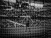 Ederson - Manchester City (bobbex) Tags: mcfc manchestercity soccer football premierleague englishpremierleague sport etihad etihadstadium bw blackandwhite blackwhite footballers mancity goalie goalkeeper