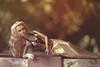💛 Poppy Parker Midnight Sparkle 💛 (lichtspuren) Tags: integritytoys poppyparker poppy parker midnightsparkle poppyparkerfashionteen 16 16inch blonde gold canon eos 6d ef 50mm f12 l usm 14scale lichtspuren