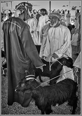 """Bargaining in the Goat Souk"" (flavius200) Tags: men bedu flavius200 dorking photocraft omani portrait camera club bedouin arabia desert sand scrub mountain mono monochrome black white nikon d200 wilfred thesiger desolate isolated uae 4x4 camping alone traveller exploring tribes david harford morning evening night market souk souq oman"